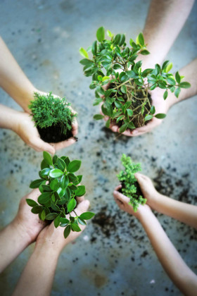 Hands-plants