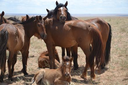 Wild horses in Mongolia. / Photo: Ed Durgan