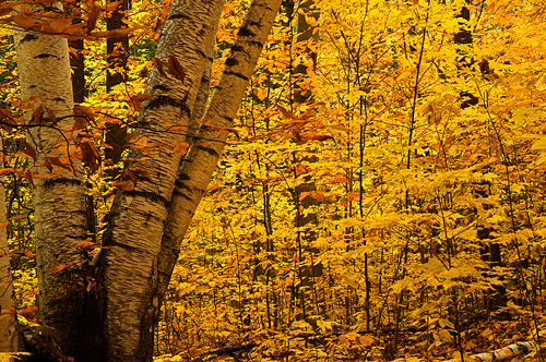 The Morgan Arboretum in all its fall glory. / Photo: Paul Scheiwiller
