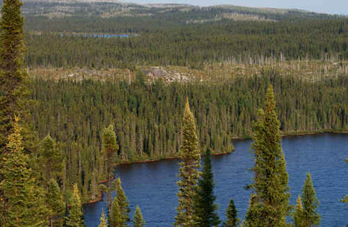 Boreal forest in Quebec. / Photo: Wikimedia Commons