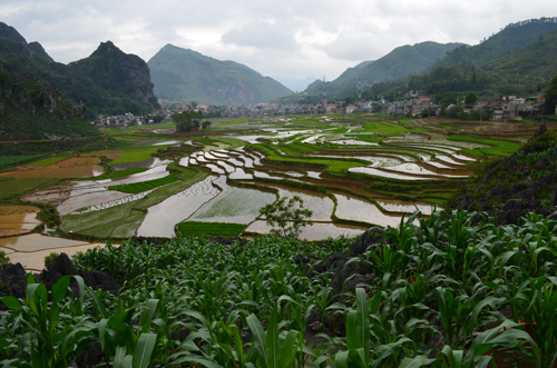 Upland maize fields and rice paddies tended by ethnic minority farmers in northern Vietnam. / Photo: Victoria Kyeyune.