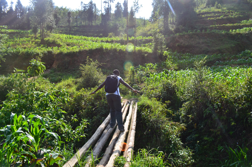 Victoria Kyeyune navigates a wobbly bridge among corn fields, after household interviews in Hà Giang province. / Photo courtesy of Victoria Kyeyune