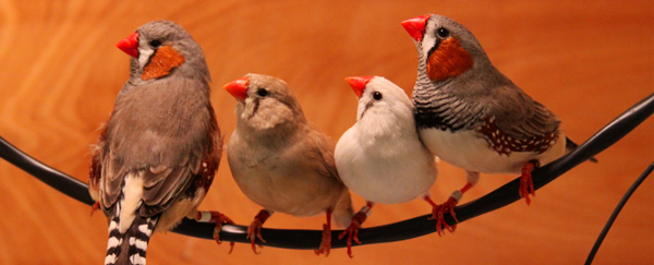cropped-4birds1red