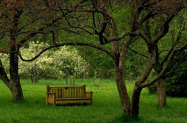 mongan_arboretum_david_inglis_rest_stop_in_blossom_corner_0