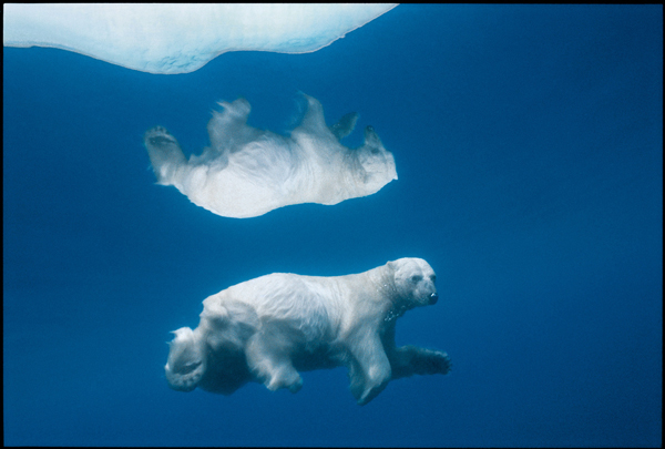 Photo: Paul Nicklen/National Geographic Creative