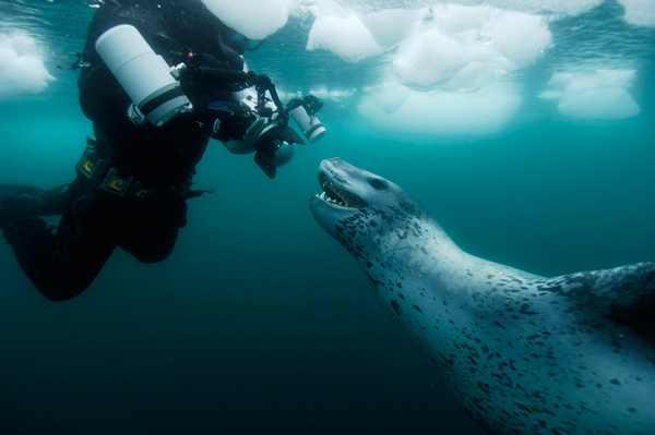 Paul Nicklen gets up close and personal with a leopard seal, one of the Antarctic's apex predators. / Photo: Göran Ehlme