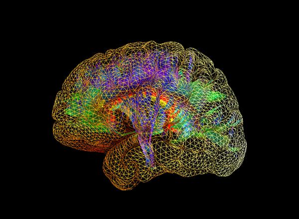 brain_crop