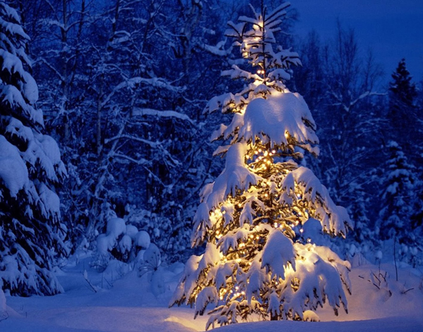 Christmas-Tree-in-Snow-Wild-Picture