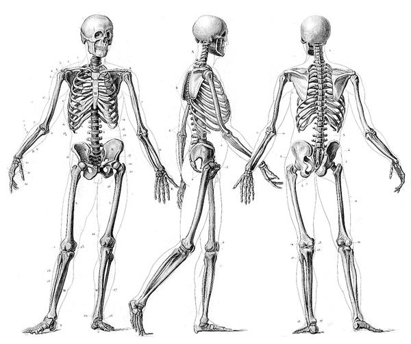 skeleton-5
