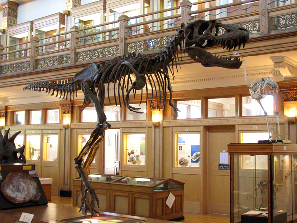 Gorgosaurus_libratus