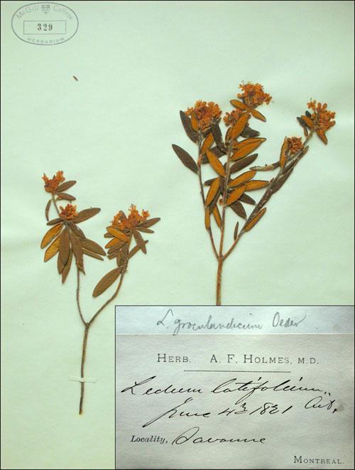 herbarium5-lg