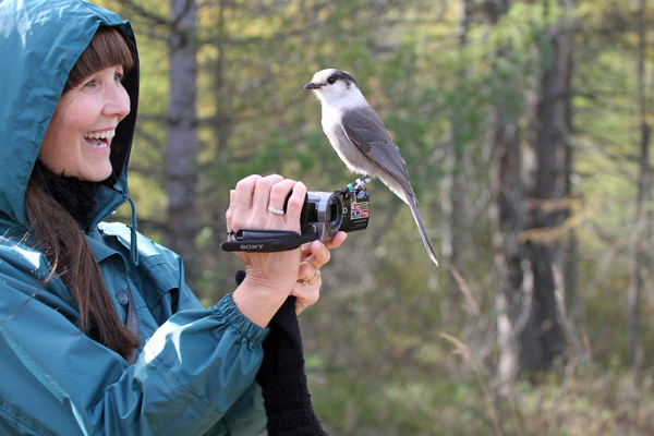 While visiting Algonquin Park, Patti Parker discovers firsthand just how friendly a gray jay can be. / Photo: Gord Belyea