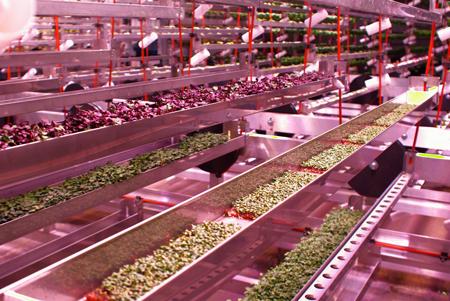 En contrôlant complètement l'environnement où poussent les légumes, le modèle d'agriculture « cubique » permet d'en accélérer la vitesse de croissance. Photo : Urban Barns