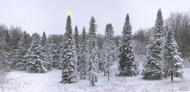 Arboretum-Christmas