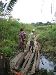 In order to reach our sites in the swamp, we must cross log bridges. In this photo: Erika Crispo, right; local Ugandan, left. / Photo: Jaclyn Paterson.