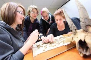 From left to right: BA students Anita Sacco, Amelia Boaks, Taylar Reid and Kim Brooks examine bones from the Parc Safri dig. / Photo: Owen Egan